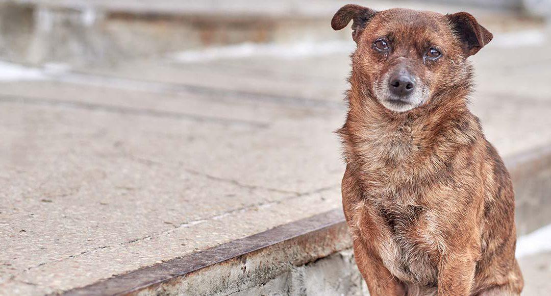 Jak jsem vAfrice pomáhala kastrovat toulavé psy
